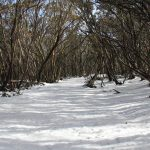 Craig's Hut 31 - snow covered track and blue sky, what a glorious day on Mt Stirling