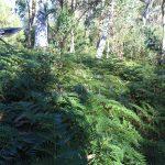 Eagle Peaks 1 day 1 - walking through dense ferns
