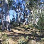 Eagle Peaks 1 day 3 - easy walking on a ridge
