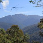 Eagle Peaks 9 - View of Mt Buller from the track on day 1