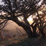 The Crosscut Saw 37 - sunset from Mt Buggary (1)