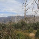 The Crosscut Saw 8 - view of Mt Buller from Mt Thorn, day 1